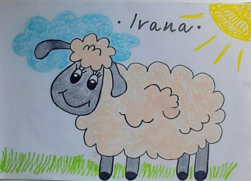 ozanino stado ovaca